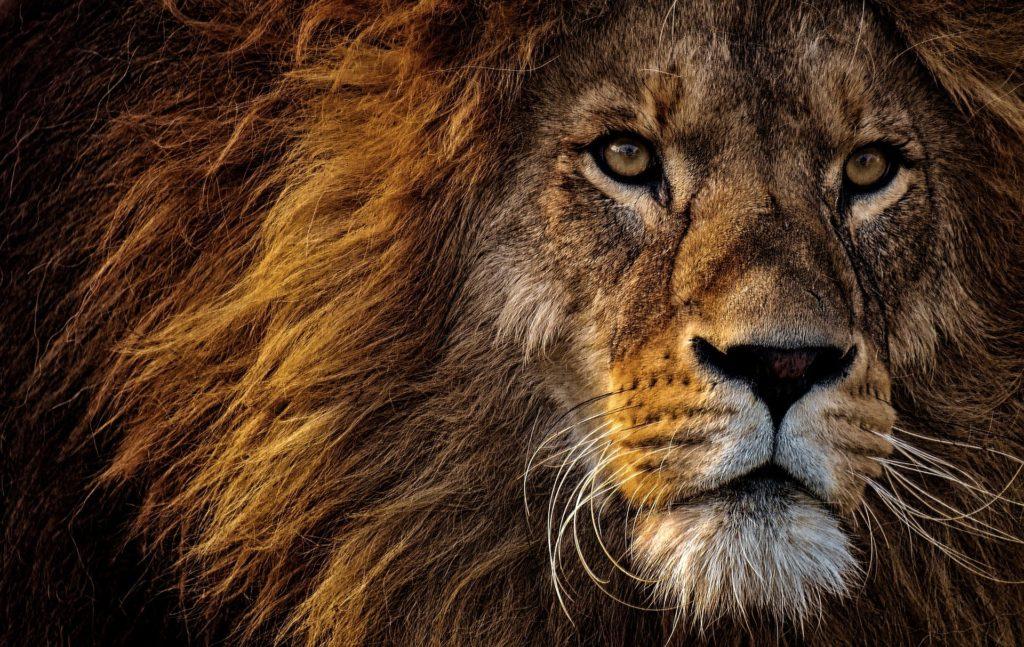 Löwenprogramm